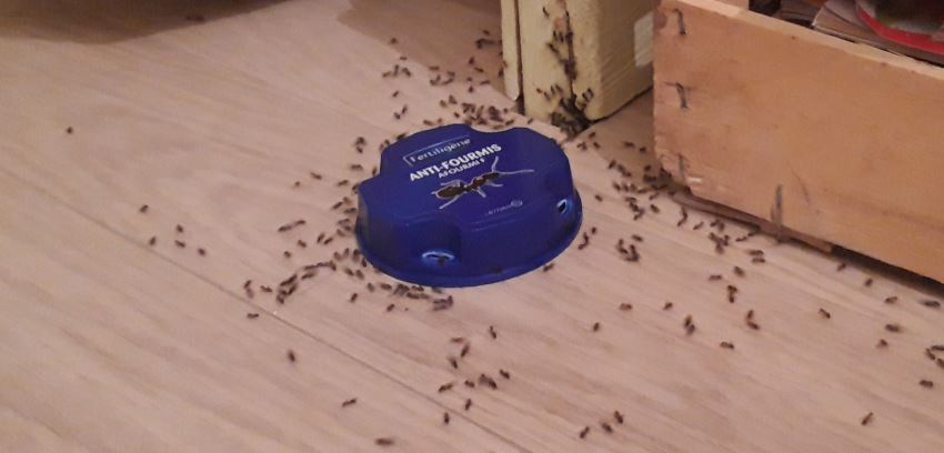 piege-anti-fourmis