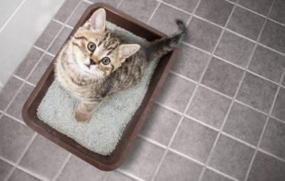 Comment enlever l'odeur d'urine de chat ?