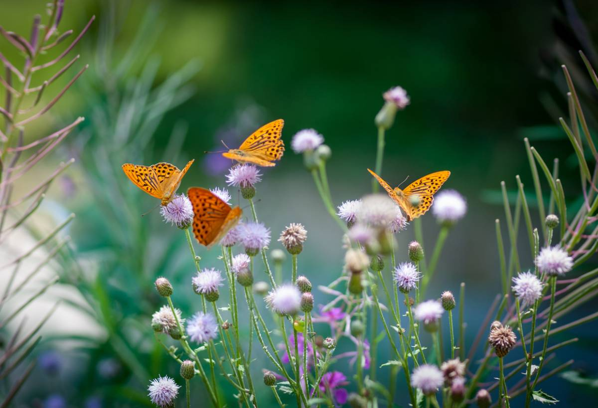 comment-attirer-les-papillons-dans-son-jardin