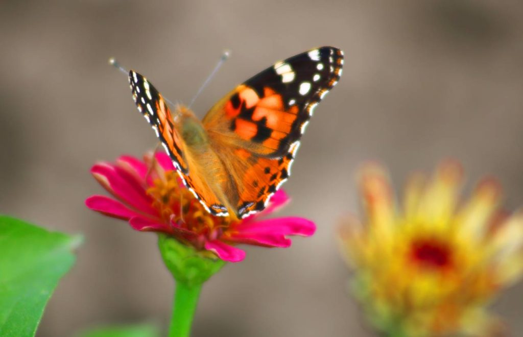 papillons-comment