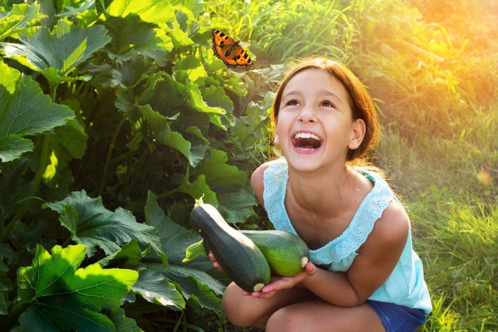 image-papillons-menacees