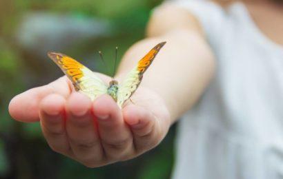 Quelles sont les espèces de papillons menacées en France ?