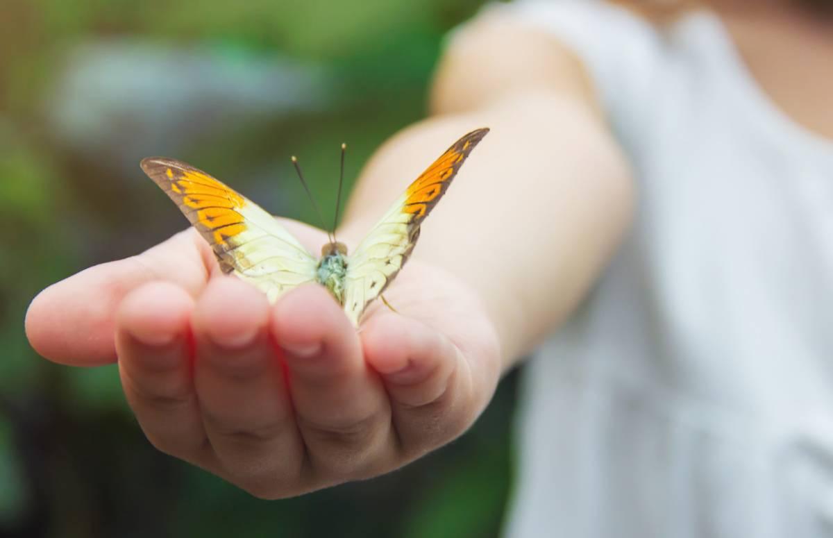 quels-sont-les-especes-de-papillons-menacees-en-france