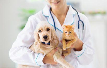 Chiens et chats : les races qui nécessitent le plus de soins