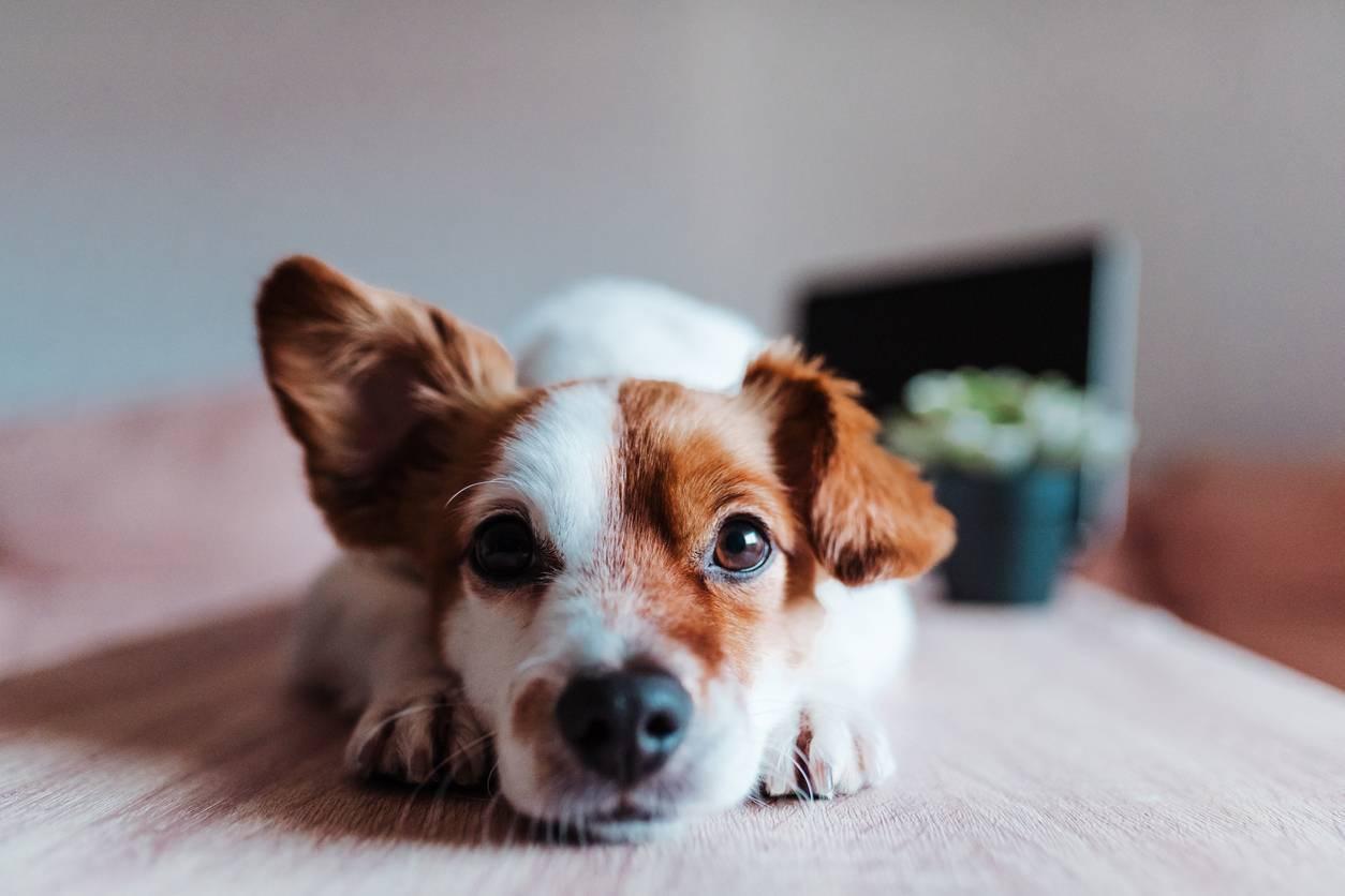 aménager un espace pour chien