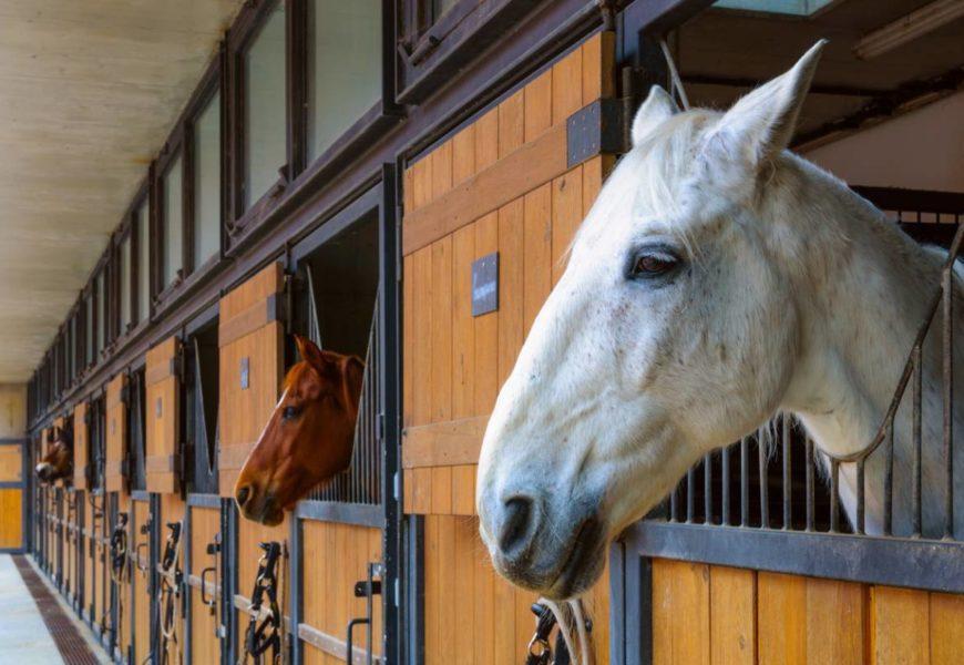 Équitation : pourquoi utiliser une tenture de box ?