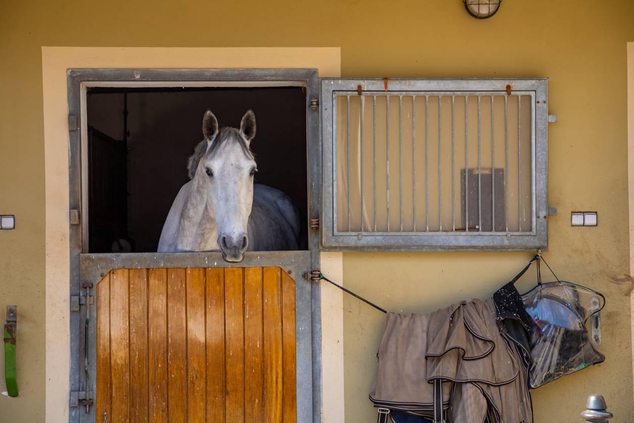 tenture box cheval