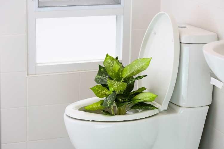detartrer-wc-naturel